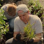 rain-gardens-man-planting