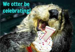 otter-be-blog