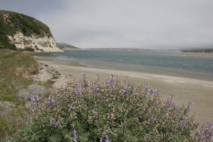 point reyes coastline photo