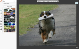 picmonkey tutorial merge image dog