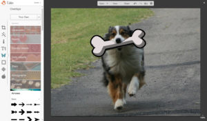 picmonkey tutorial image merge dog5