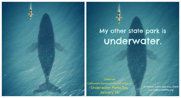 my other state park is underwater whale meme