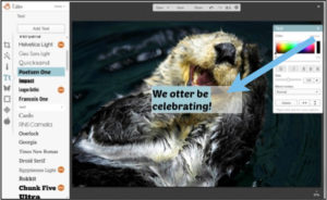 otter be celebrating picmonkey tutorial