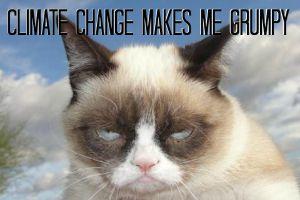 grumpy cat climate