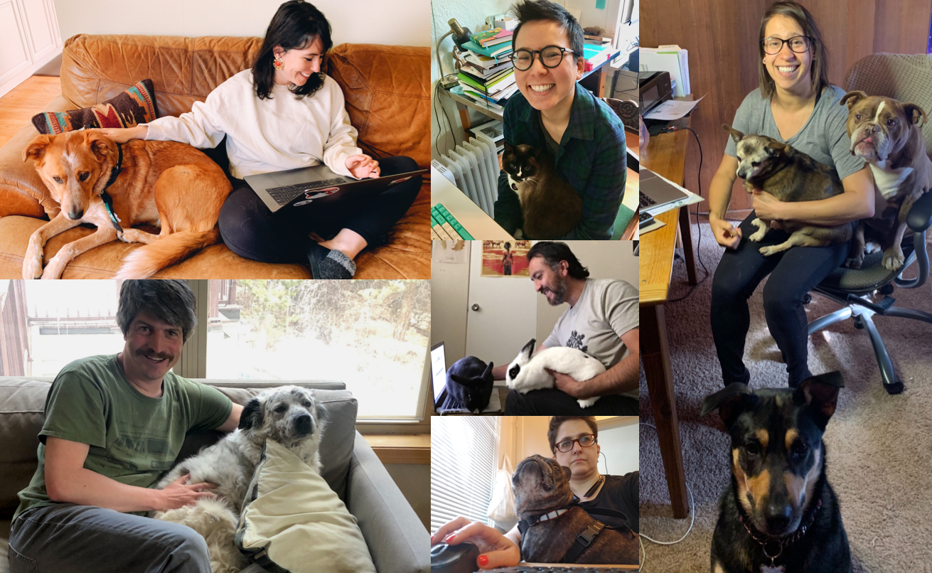 Collage of various employees working with their dogs, cats and rabbits